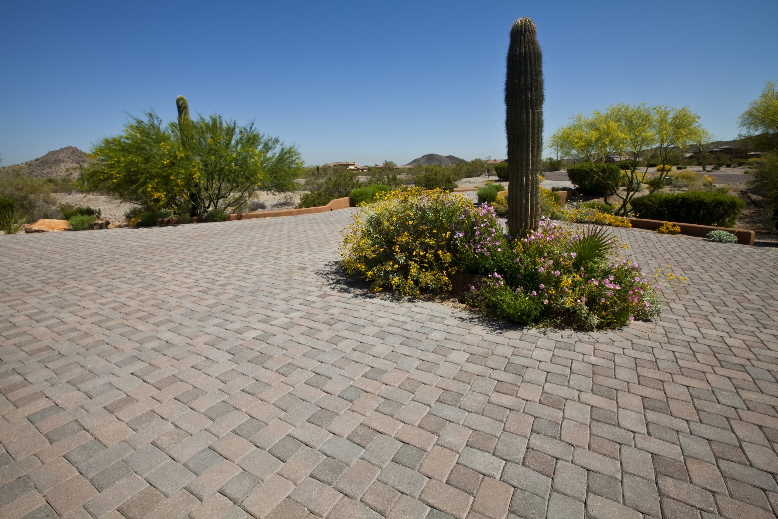 Paver Brick Driveway with Wild Flowers and Saguaro Cactus